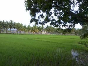 mambayaan1